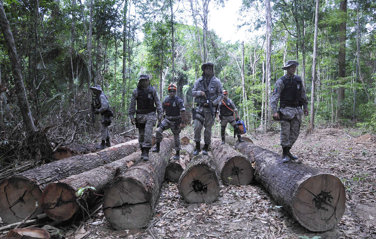 Soldiers at an illegal logging camp on Awá land. The Brazilian government has mounted a huge operation to evict illegal invaders from the Awás forest.