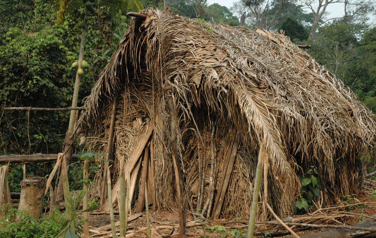 The Last of his Tribe built a tiny hut in the garden he is cultivating in Tanaru territory, Rondônia state, Brazil. He is believed to be the only survivor of a tribe massacred by ranchers in the 1970s and 1980s. He lives on his own in a patch of forest, surrounded by cattle ranches and soya plantations. Very little is known about him.