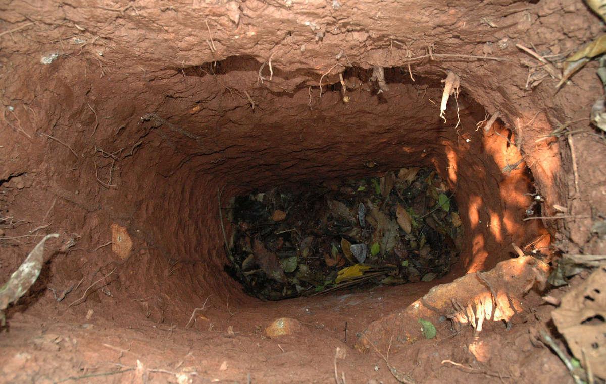 Lhomme creuse de profonds trous pour piéger des animaux et sy cacher. On pense quil est le seul survivant dun peuple massacré par des éleveurs dans les années 1970 et 1980.