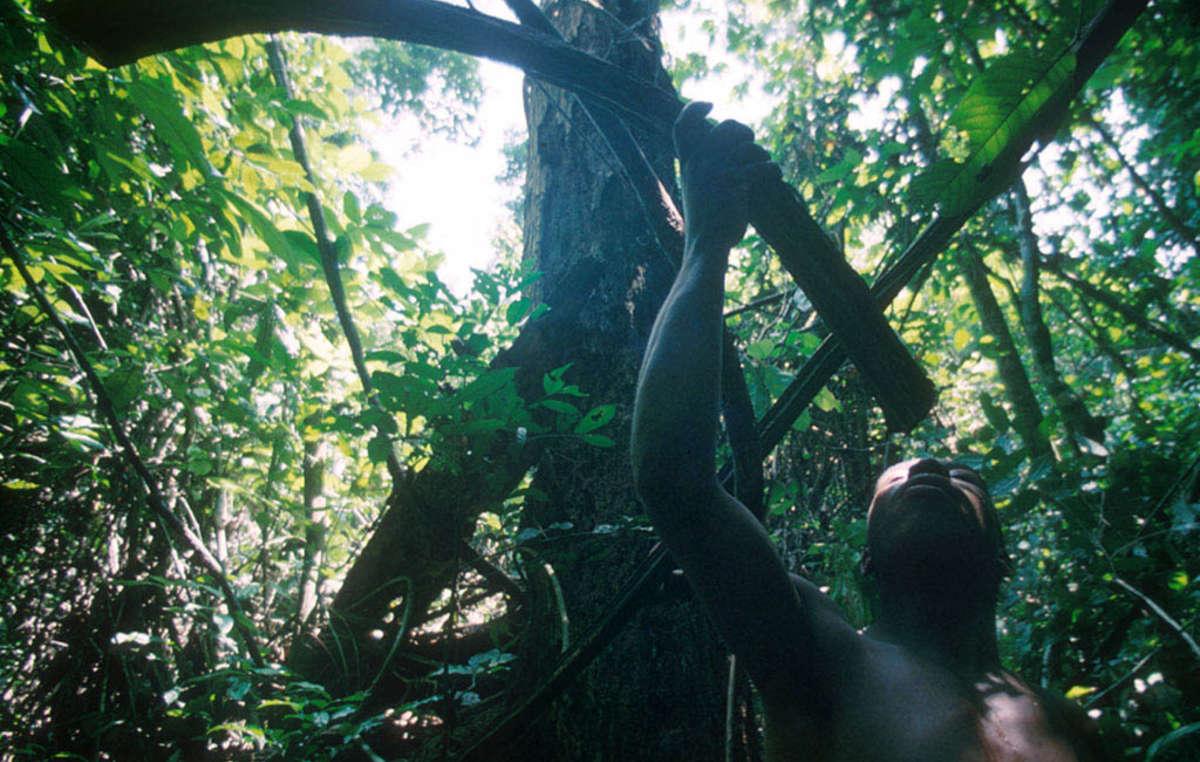 Onde os povos indígenas continuam a ter acesso aos recursos florestais, sua qualidade de vida permanece alta.
