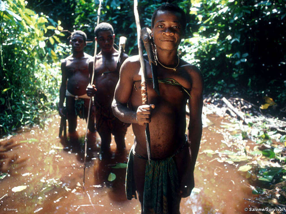 Hunting Techniques Vary Among The Pymgy Peoples And Include Bows Arrows Nets Spears
