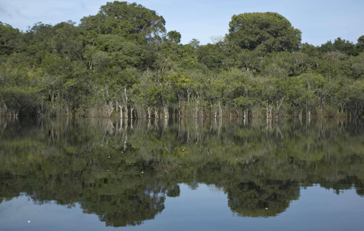 Die Schönheit des Amazonas