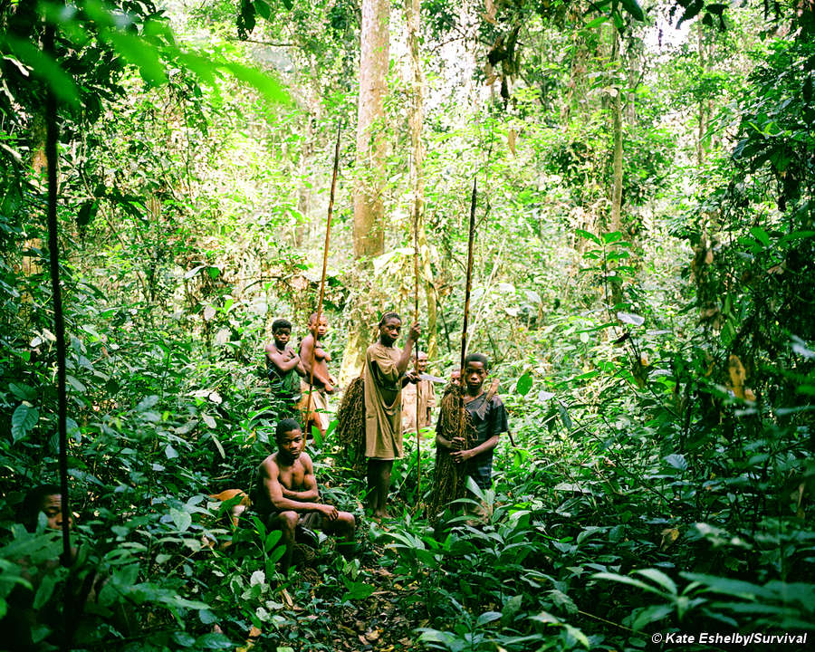 Pygmies survival international where pygmy communities have access to the rich forest resources on which they have traditionally depended their levels of nutrition are good publicscrutiny Images