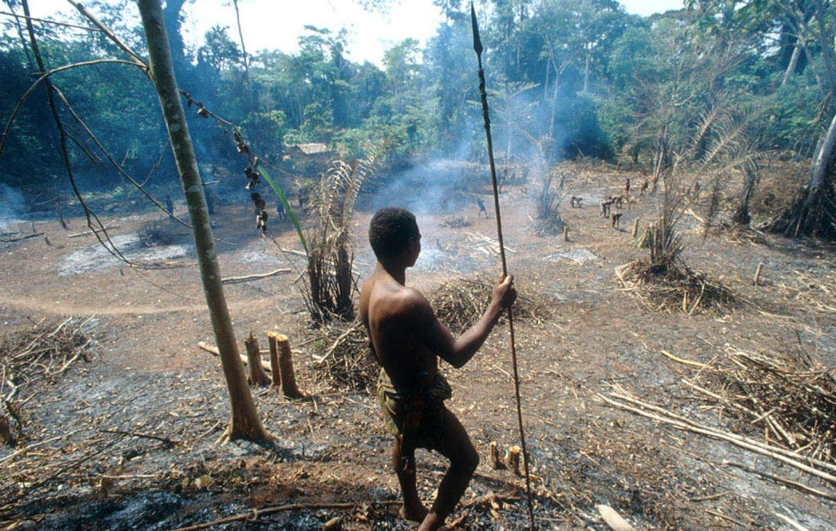 As comunidades locais são frequentemente induzidas a assinar seus direitos à terra, os resultados são devastadores para as pessoas, para a floresta e para o clima.