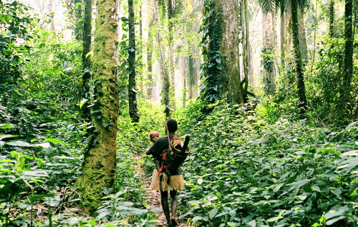 La frondosa selva es un factor clave en el sentido de identidad de los pigmeos. Su tierra conforma su cultura y les proporciona su sustento.