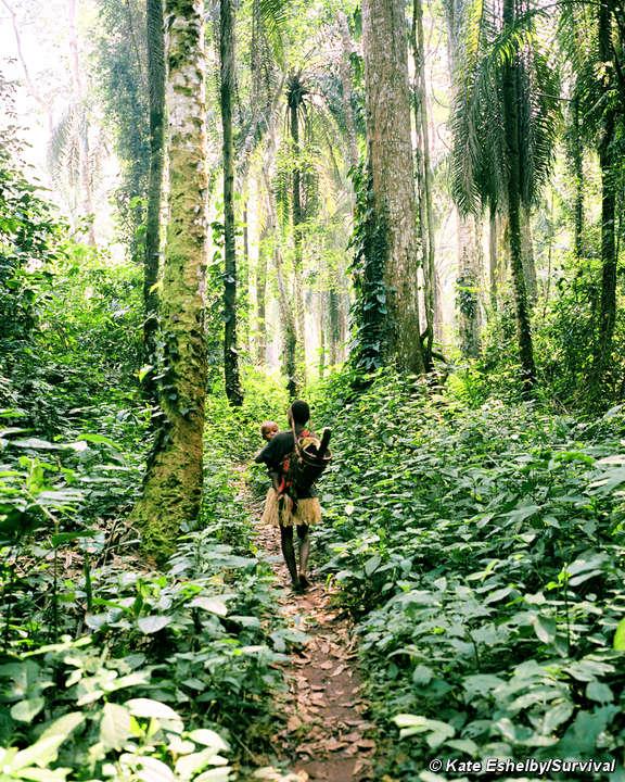 Pygmies survival international drc pyg ke 38460landscape publicscrutiny Images