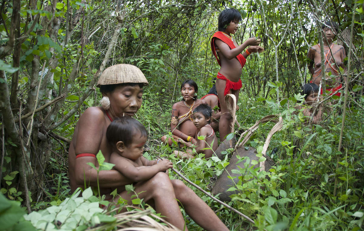 Yanomami women and children gathering leaves to turn into timbó, a poison used to stun fish, 2010.