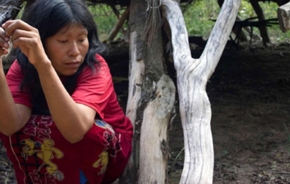La destruction de la forêt des Ayoreo pour lélevage de bœuf menace de décimer la tribu isolée des Ayoreo-totobiegosode.