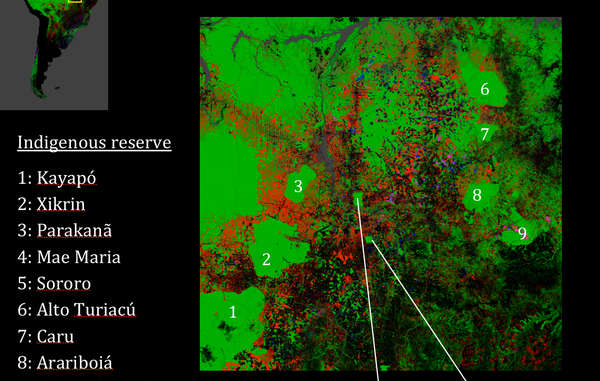 Satellite imagery shows how indigenous territories (numbered green areas) conserve Amazon rainforest and act as a barrier to deforestation (other colors)