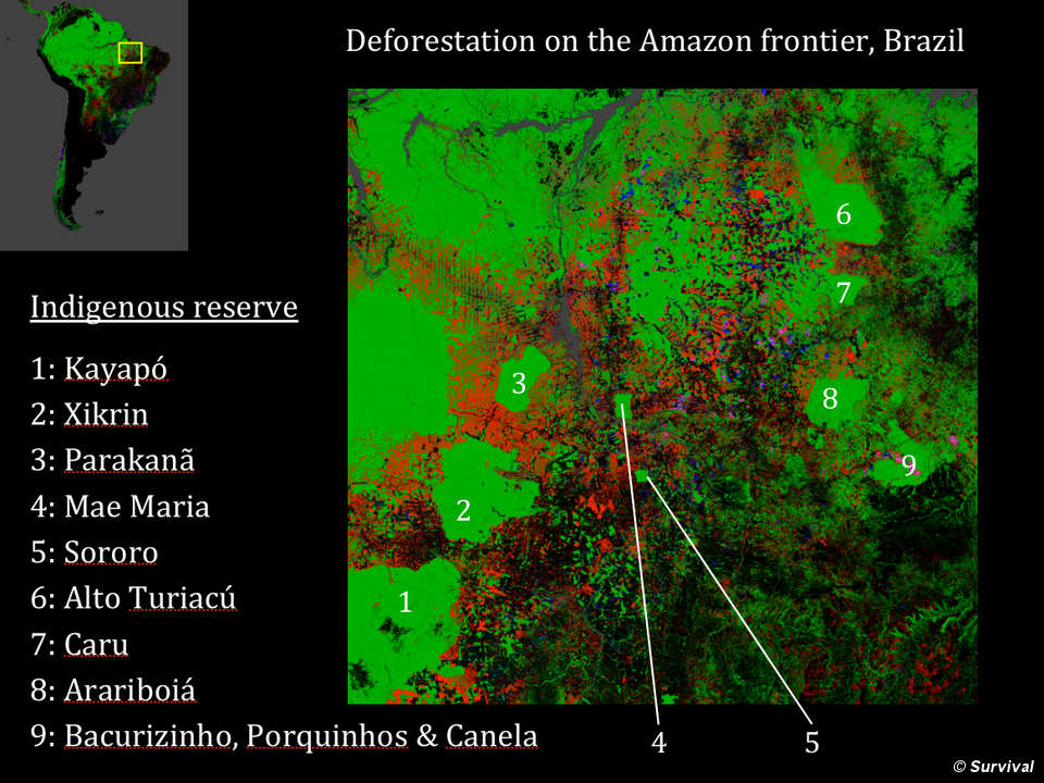 deforestation indigenous peoples and amazon essay Three to six million indigenous people lived in the amazon basin at the time of columbus, but fewer than 500,000 remain today worldwide, there.