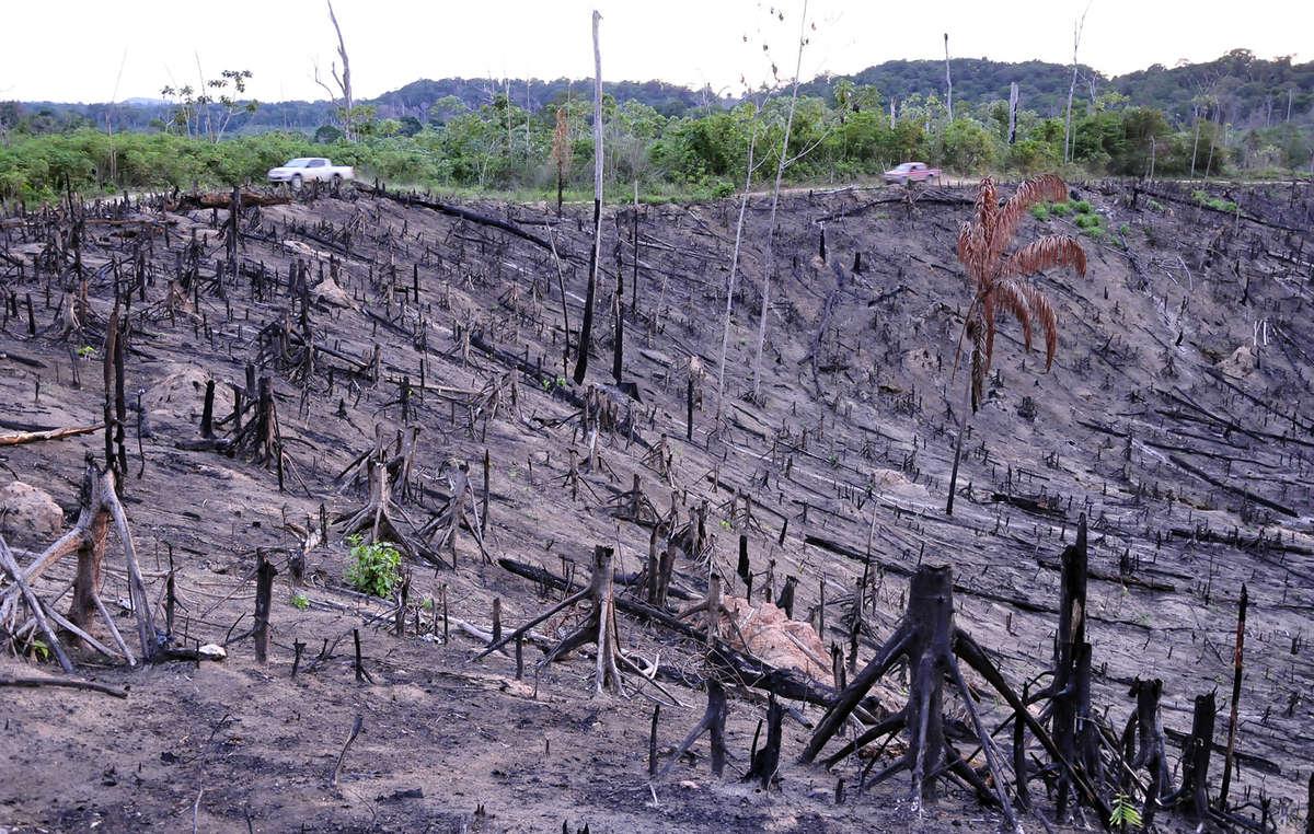 Straßen wurden durch das Gebiet der Awá von illegalen Holzfäller geschlagen. Brasilien, 2014.