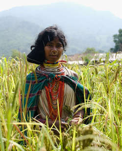 Dongria Kondh woman picking millet in Niyamgiri, India