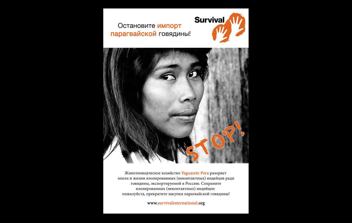 La nouvelle campagne publicitaire de Survival appelle la Russie à mettre un terme aux importations de bœuf paraguayen jusqu'à ce que le territoire des Ayoreo soit protégé.