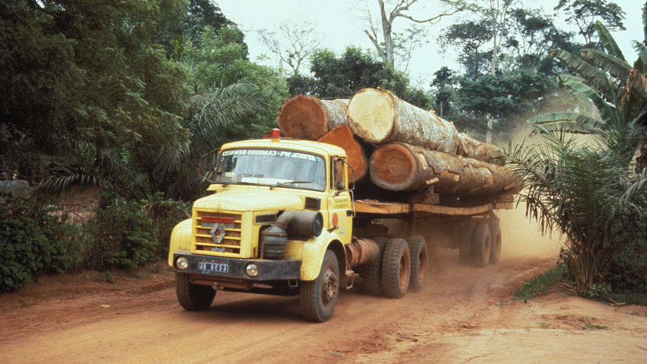 Big conservation organization given 'award' for partnering with logging companies and undermining tribal rights