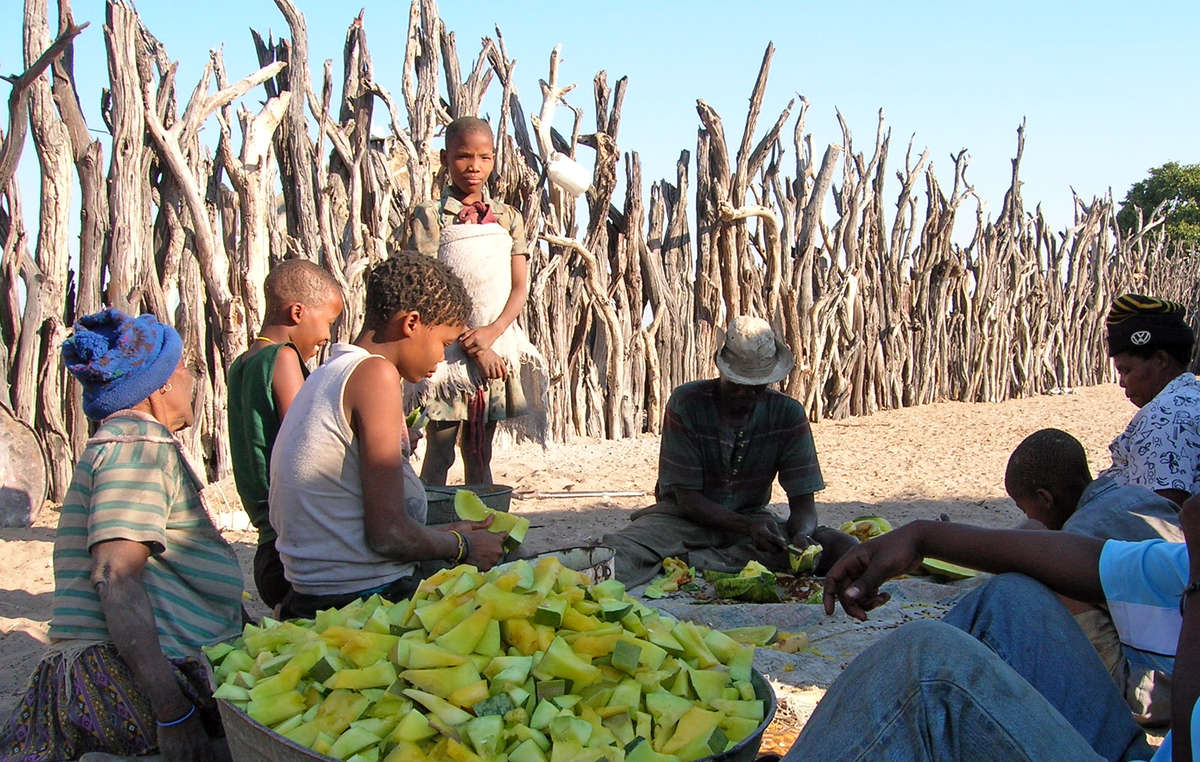 Many Bushmen are forced to rely on watermelons for vital fluid because of lack of access to boreholes on their ancestral land