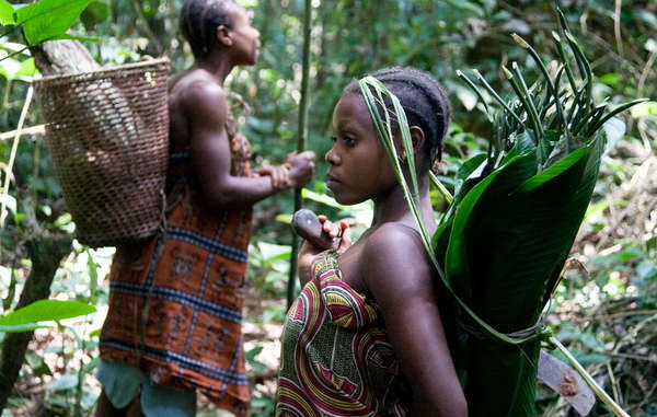 Traditionally, small 'Pygmy' communities moved frequently through forest territories, gathering a vast range of forest products, collecting and exchanging goods with neighbouring settled societies.