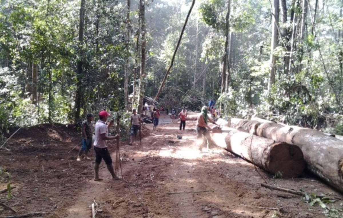 Ka'apor Indians formed an indigenous 'army' to combat illegal logging in their forest