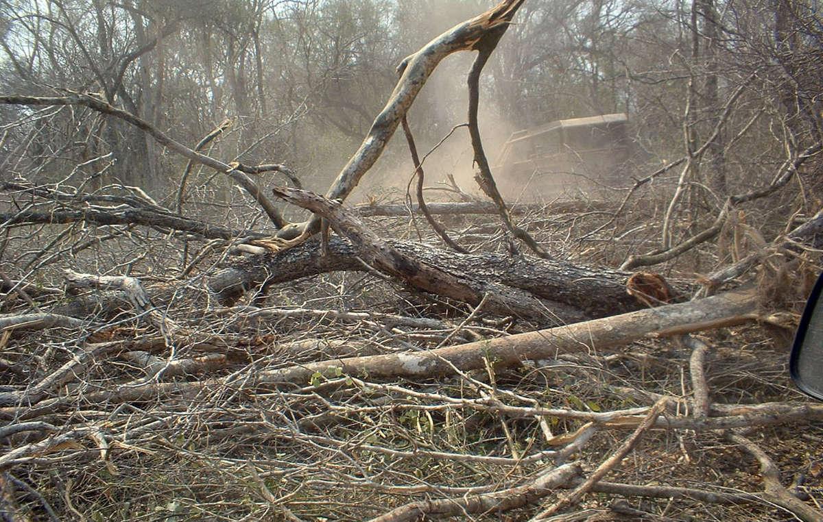 El Chaco está siendo deforestado rápidamente, lo que pone en riesgo a los ayoreos no contactados.