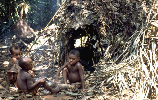 In the past few decades the 'Pygmy' peoples homelands have been devastated by logging, war and encroachment from farmers.