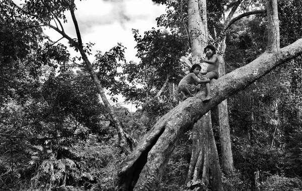 Le straordinarie immagini degli Awá dell'Amazzonia brasiliana, scattate da Sebastião Salgado nel 2013, saranno in mostra allinterno del bioma tropicale dell'Eden Project in Cornovaglia, nel Regno Unito. Gli Awá sono stati brutalmente attaccati dai taglialegna, e cacciare nella foresta è sempre più difficile.