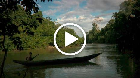 Fremder im Regenwald