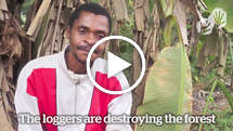 "Baka ""Pygmy"" speaks out against destructive loggers"