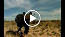 Reporters-bushmen-thumb_widescreen_medium_small_play